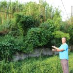 Michael Groves shows the extent of the overgrown vegetation on a vacant property neighbouring his home on Tramway Road.