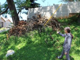 Angela Fortune says the area outside her house has also become a dumping ground. She is urging the City to cut down two large Syringa trees outside her property which may damage her home.