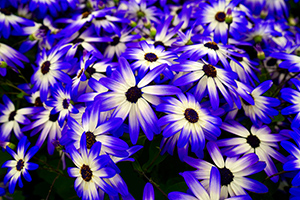 Gardening tips to add colour