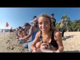 Baby Sea Turtle Release   Kuta, Bali