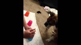 Dog could not be worse at the simplest of cup games