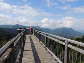 The Dorrigo Rain forest Centre skywalk.