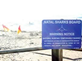 sharks board