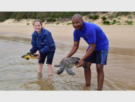Kelly Brown and Jerry Ntombela of uShaka Sea World prepare to release rehabilitated turtles into the ocean at iSimangaliso's Sodwana Bay.