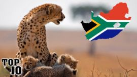 Top 10 Things To Do In South Africa