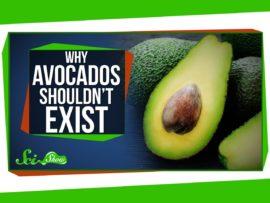 Why Avocados Shouldn't Exist