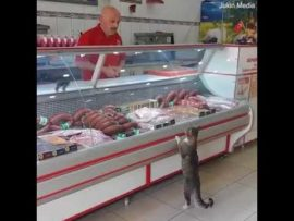 Butcher chats to cat as he serves it at deli in Turkey