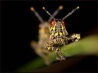 Hendrik Louw's impressive 'Locusts' won the Selective Focus theme category
