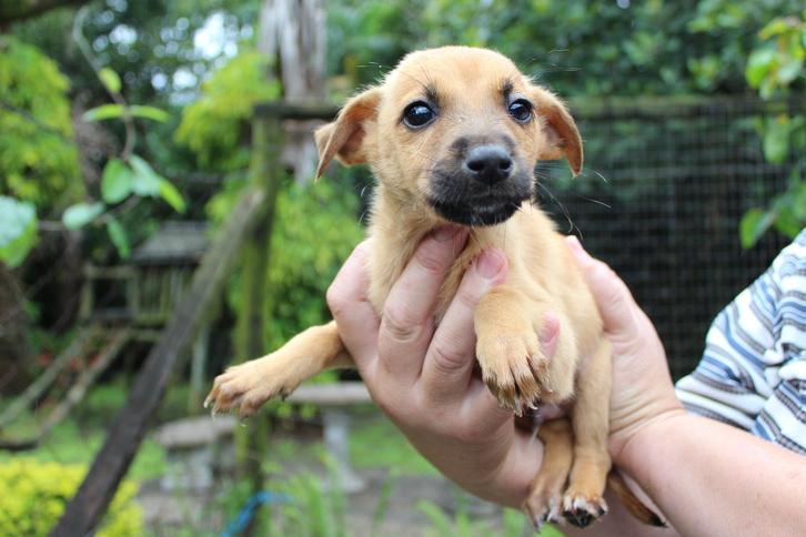 Richards Bay SPCA adoption corner | Zululand Observer