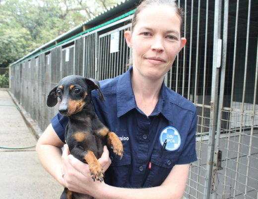 Adopt a pet from the SPCA | Zululand Observer