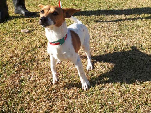 Midrand SPCA adoptions | Midrand Reporter