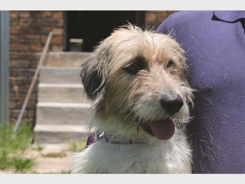 Midrand SPCA dogs looking for a home | Midrand Reporter