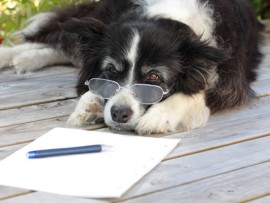 letter-writing-week-dog-1_0
