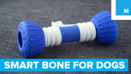 This Smart Bone will Keep your Dog Playing for Hours