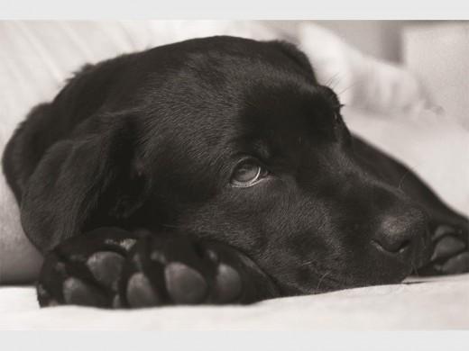 Inoculate your pet against parvovirus | Newcastle Advertiser