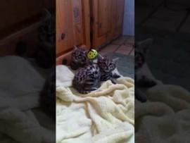 MUST WATCH: Feline rescue by the Bird Lady