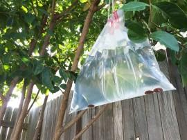 plastic-bag-793x526