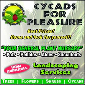 Cycads for Pleasure Tel: 083 304 0690