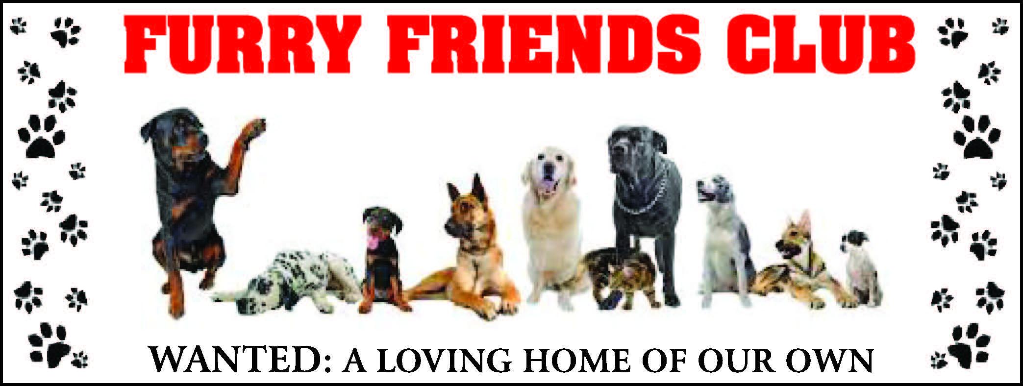 Furry Friends Banner