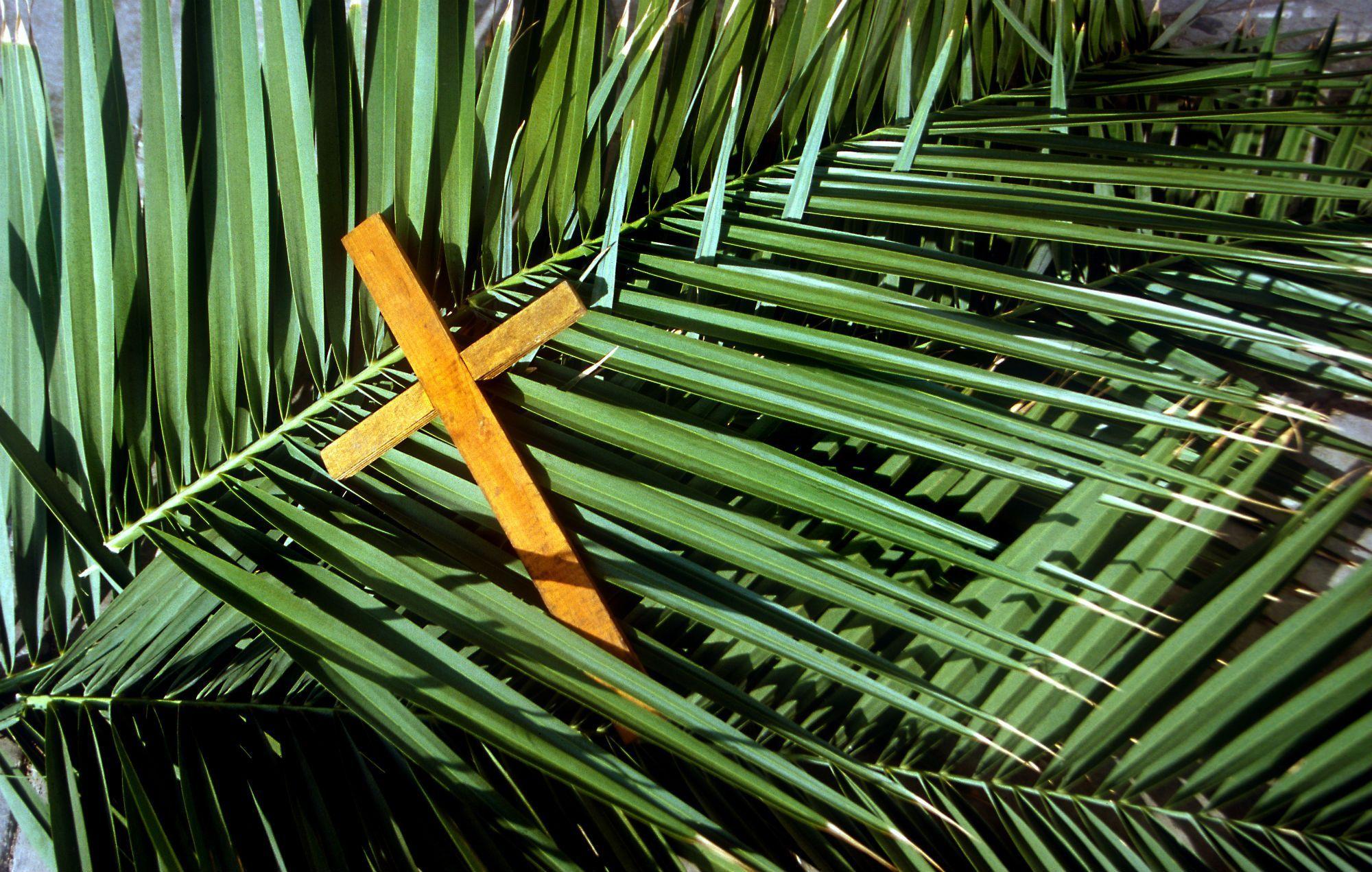 Christians mark palm sunday northern kzn courier for Prayer palm plant
