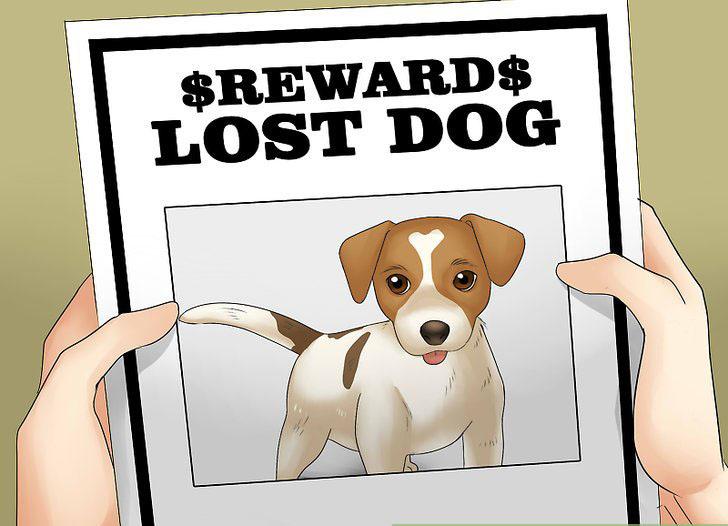 lost dog poster maker