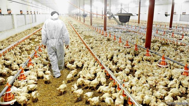 Motsoaledi: Govt will support lawsuits over listeria outbreak