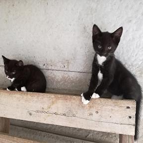 14 kittens