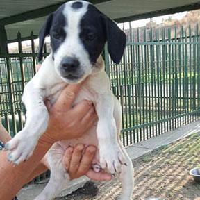 Adopt me please :)