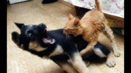 NINJA CATS vs DOGS – Who Wins?