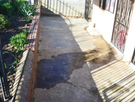 The water leak trickles into the yard of a Hibiscus family.