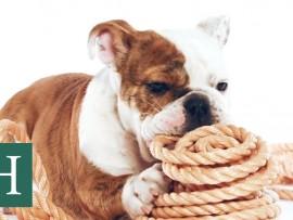 Cute Puppies Exploring Things