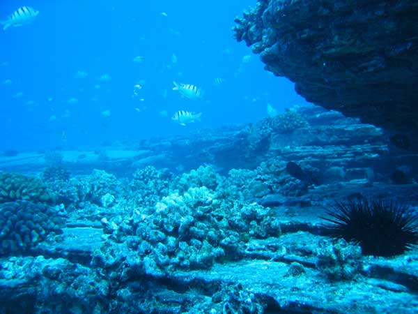 National Marine Week launch at Bolivia | Review