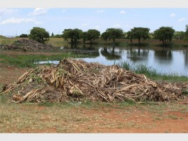 Reeds and tall grass have been removed by the Polokwane Municipality in an effort to stop the illegal dumping of refuse at the Flora Park dam.