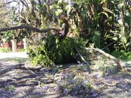 A fallen tree has blocked part of Hoog street between Van Boeschoten and Rissik. Electric wiring has broken off and is lying in the road.