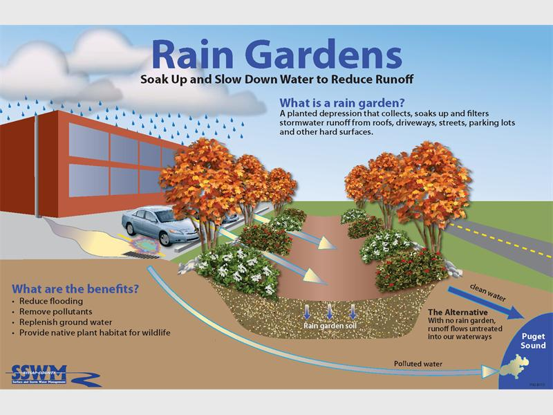 Rain garden eco friendly way to save water review a rain garden allows rainwater runoff from urban areas such as roofs driveways walkways parking lots and compacted lawn areas the opportunity to be altavistaventures Images