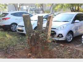 A tree that has been there for 56 years gets cut down by Hyundai Northcliff.