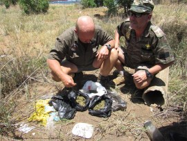 Sgt Tjoepie van Staden (Police reservist) and Nico van der Walt (Wildlife Investigations and Protection Services) with dagga that was found in some shrubs outside Groblersdal last Tuesday.