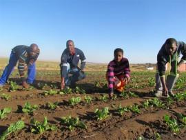 Tlareboneng Sephaku gardening project members: Lazarus Rampedi (36), Thabo Lerobane (34), Virginia Rampedi (38) and Tebogo Tshego (34) at work in their vegetable garden in Sephaku village.