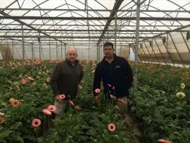 Kim Hagemann and his partner Martin Alborough amongst their gerberas inside the multispan at Bethany Farm.