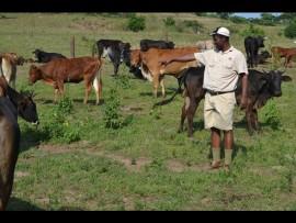Bongani Khuzwayo is a proud stock farmer of Maphumulo.