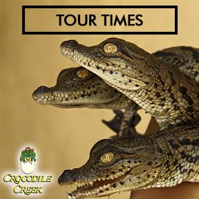 Crocodile Creek  082 920 0730