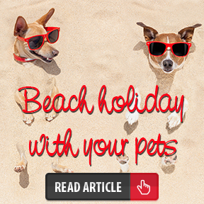 Holiday_Pets