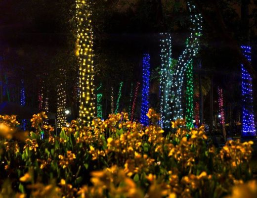 WATCH: Lighting up the Christmas fairy land at Durban