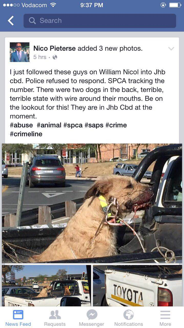 UPDATE: SPCA requires assistance in locating wired dogs