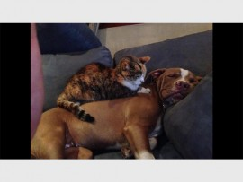 Deja the dog and Mice the cat cuddle together on the couch.