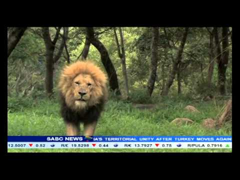Two Zimbabwe locals appeared in court for poaching Cecil the lion