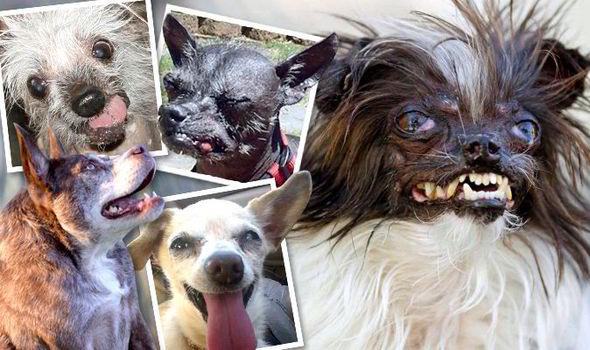 W 234 Reld Se Lelikste Honde Rekord East