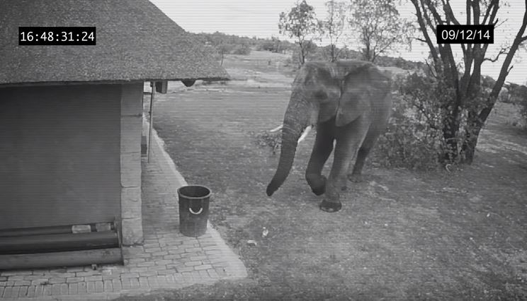 elephant-picks-up-trash