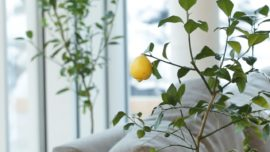 Did you know that you can grow fruit in your kitchen?