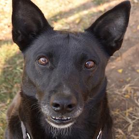 adoption dog